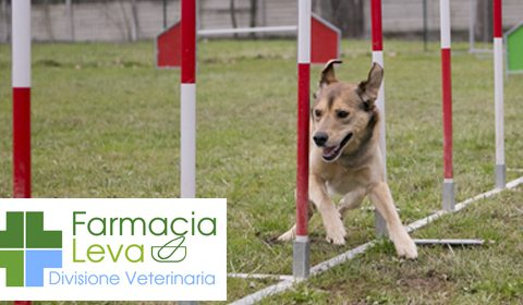 VETERINARI: Laboratorio Leva
