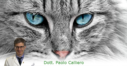 METIMAZOLO GATTO: gel transdermico